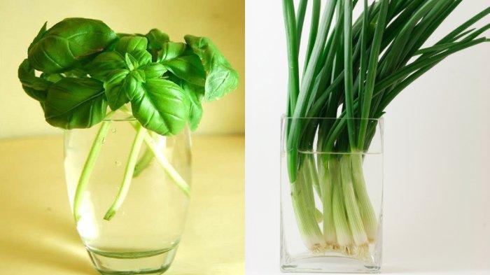 11 Bunga dan Sayuran yang Bisa Tumbuh Hanya dengan Media Segelas Air