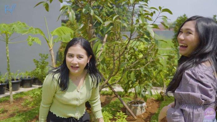 Tanaman di kebun organik Prilly Latuconsina.