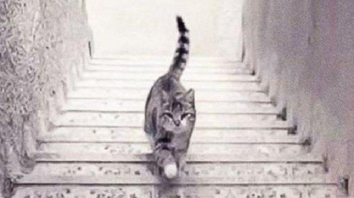 Tebak Kucing Ini Sedang Naik Atau Turun Tangga? Jawabannya Ungkap Orang Seperti Apa Dirimu