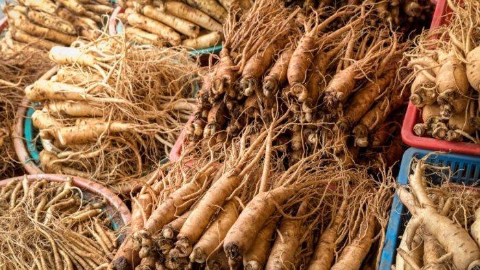 7 Manfaat Jika Rutin Minum Teh Ginseng, Dari Turunkan Berat Badan Hingga Membuat Kulit Sehat