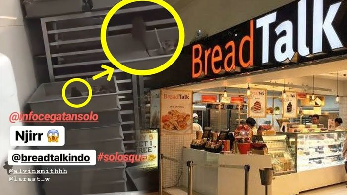 Beredar Video Viral Seekor Tikus Berkeliaran di Dapur Gerai Toko Roti Terkenal di Solo, Menjijikkan!