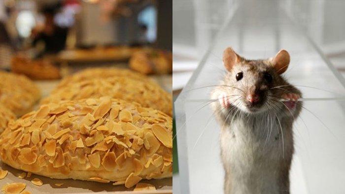 Heboh Terekam Tikus di Toko Kue Terkenal Ini, Warganet Banjiri Akun Instagram Minta Tanggung Jawab!