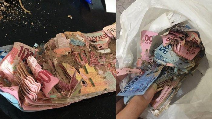 Viral Gadis Temukan Uang Simpanan Almarhum Nenek Dimakan Rayap, Padahal Sudah Ngumpul Rp 10 Juta