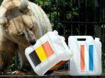 beruang-pamir-prediksi-hasil-semifinal-prancis-vs-belgia_20180710_232144.jpg