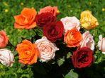bunga-mawar_20180403_211511.jpg