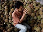 cara-memilih-durian.jpg
