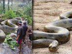fakta-terkait-penemuan-ular-raksasa-di-amazon-4-tahun-lalu.jpg
