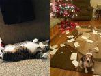 hewan-hewan-hancurkan-natal_20171222_225313.jpg