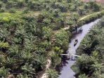 hutan-kelapa-sawit-di-indonesia.jpg