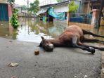 kuda-penarik-delman-ditemukan-mati-setelah-nekat-terobos-banjir.jpg