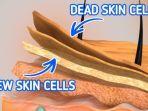 lapisan-jaringan-kulit.jpg