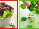menucuci-sayuran.jpg