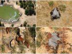 miris-360-lebih-gajah-mati-berkelompok-kematian-masih-jadi-misteri-yang-masih-hidup-juga-terancam.jpg