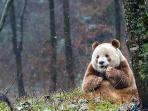 panda_20161014_114626.jpg