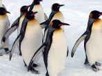 penguin-berbaris_20170303_171501.jpg