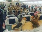 puluhan-burung-elang-di-pesawat_20170201_133131.jpg