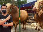 raffi-ahmad-beli-10-ekor-sapi-untuk-dikurbankan-di-hari-raya-idul-adha-2021.jpg