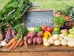 sayuran-organik_20160825_203626.jpg