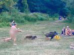 seorang-pria-telanjang-berlari-mengejar-babi-yang-mencuri-tasnya.jpg