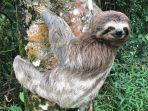 sloth-hewan-terlambat-di-dunia.jpg