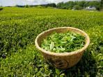 teh-hijau_20160821_185551.jpg