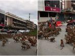 terjadi-lagi-2-geng-monyet-perang-di-jalanan-thailand-warga-setempat-terperangkap.jpg