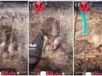 terkurung-tak-berdaya-pria-ini-bunuh-seekor-monyet-yang-terperangkap-dengan-sebuah-pistol-viral.jpg