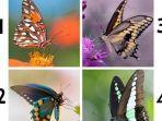 tes-kepribadianmu-kupu-kupu.jpg