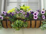 tips-feng-shui-meletakkan-tanaman-di-halaman-rumah-undang-kemakmuran-ke-dalam-hidup-anda.jpg