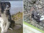 toby-anjing-yang-hilang-seminggu-akhirnya-ditemukan_20180126_174040.jpg