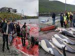viral-bikin-marah-warganet-paus-dan-lumba-lumba-ini-diburu-dan-dibunuh-untuk-sebuah-budaya.jpg