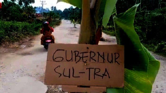 PROTES - Pohon pisang ditanam warga Desa Lalonggasu, bermukim di badan jalan, bilangan jalan Poros Andoolo-Tinanggea, Konawe Selatan, Sulawesi Tenggara, Senin (5/4/2021). Dilakukan sebagai bentuk protes karena ruas jalan mengalami kerusakan parah namun tak kunjung diperbaiki.