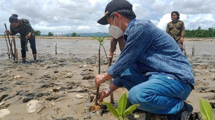 Mahasiswa UHO Tanam Ratusan Bibit Mangrove di Kawasan Ekowisata Kelurahan Lahundape Kota kendari