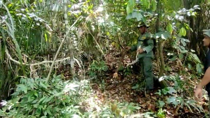 BKSDA Sultra Temukan 9 Jerat Anoa, Rusa dan Babi Hutan di Suaka Margasatwa Tanjung Peropa Konsel