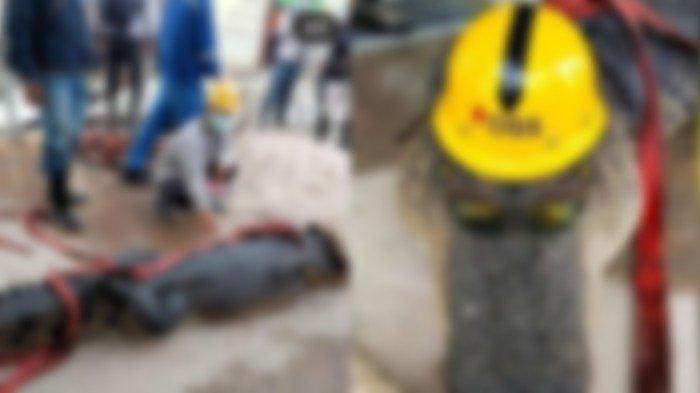 Viral Buaya Raksasa Ditangkap di Kawasan Industri Morosi Konawe, Diberi Helm dan Kacamata, Lalu Mati