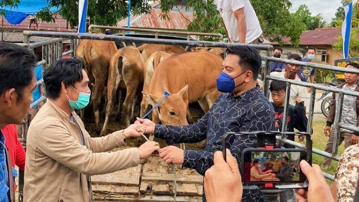Kery Saiful Konggoasa Hadiahi 5 Ekor Sapi untuk Apriyani Rahayu, Apresiasi usai Harumkan Nama Konawe