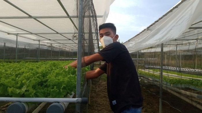 Ilomatahidroponik Kendari Tawarkan Tanaman Kualitas Terbaik Tanpa Pestisida, Harga Terjangkau