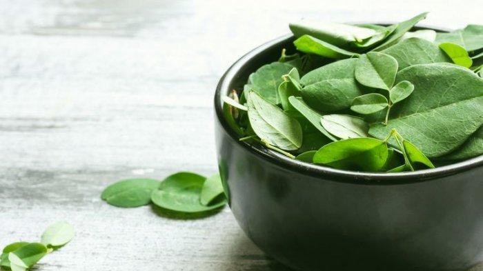 Apa Itu Tumbuhan Kelor? Berikut 10 Manfaat dan Cara Mengolah Agar Berguna untuk Kesehatan