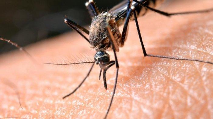 Tak Hanya Redakan Nyeri Otot, Minyak Tawon Juga Bisa Hangatkan Tubuh & Lindungi dari Gigitan Nyamuk