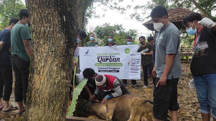 IZI Sulawesi Tenggara Kurban 93 Ekor Sapi dan Kambing, Disebar di Pelosok Kendari, Bombana, Konsel