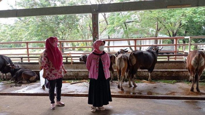 Pemkot Kendari Minta Penyembelihan Hewan Kurban saat Idul Adha di RPH