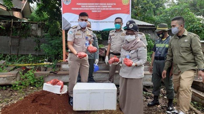 Karantina Pertanian Kendari Gagalkan Penyelundupan Daging Rusa Ilegal Seberat 100 Kg di Kota Baubau