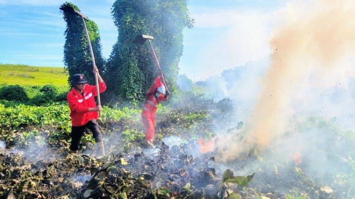 12 Hektar Lahan Gambut di Konawe Selatan Terbakar, Manggala Agni Sultra Turun Tangan Padamkan Api