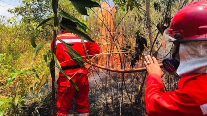 Tim Pemadam Kebakaran Lahan dan Hutan (Karhutla) Manggala Agni Daerah Operasi Sulawesi Tenggara (Daops Sultra) memadamkan api di lahan gambut Desa Lalonggasu dan Kelurahan Ngapaha, Kecamatan Tinanggea, Kabupaten Konawe Selatan (Konsel), Sabtu (2/10/2021).