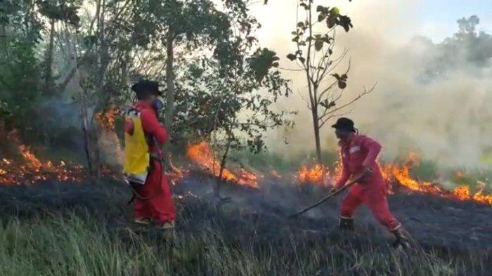 Kebakaran di Konawe Selatan Hanguskan 6 Hektar Lahan Perkebunan, 1 Rumah Kebun dan Alat Pertanian