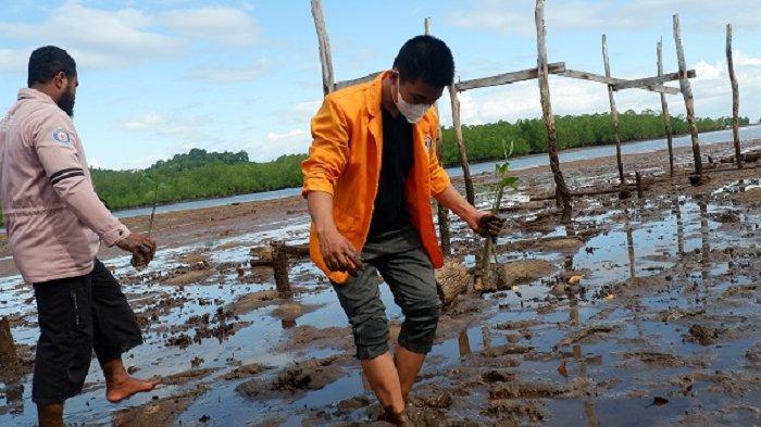 Mahasiswa UHO Tanam 100 Bibit Mangrove di Torobulu, Dampak Aktivitas Pertambangan