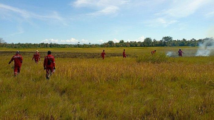 1,2 Hektar Lahan TNRAW di Konawe Selatan Terbakar, Diduga Gegara Puntung Rokok yang Dibuang Warga
