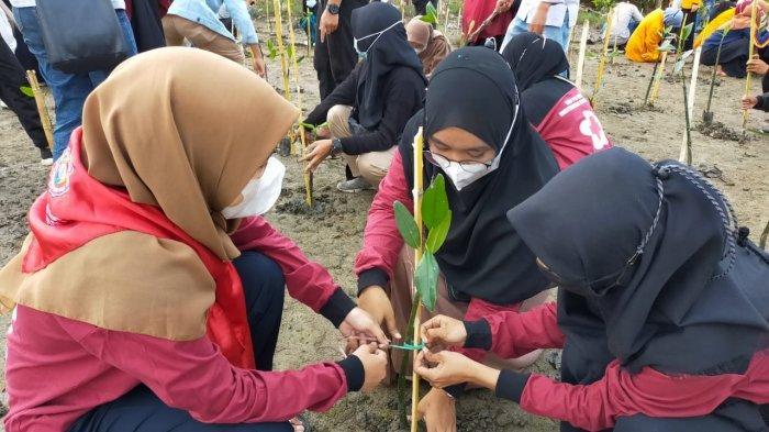 LKP Sultra Galakkan Penanaman Mangrove di Sulawesi Tenggara, Dari Kendari ke Kolaka, Muna, Baubau