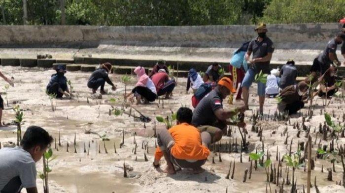 Peringati Hari Mangrove Sedunia, Balai Taman Nasional Wakatobi Tanam 267 Bibit Mangrove