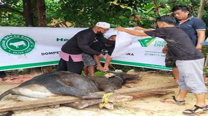 Dompet Dhuafa Sulawesi Tenggara Sembelih 360 Ekor Hewan Kurban, Disebar di 8 Kabupaten dan Kota